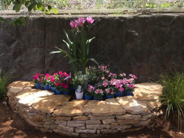 赤系でまとまった花壇