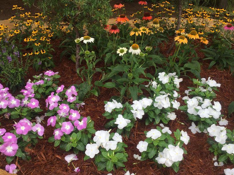 季節の花が満載の幼稚園の花壇