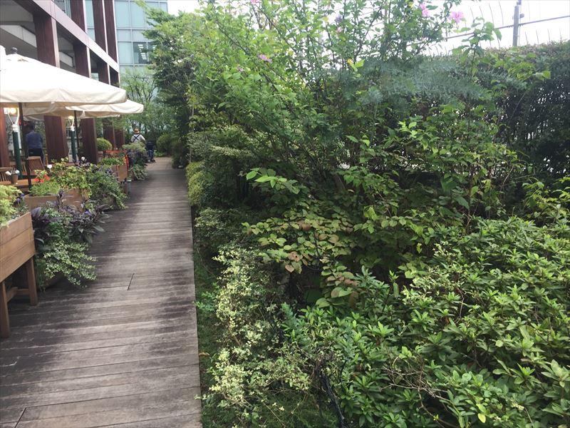 緑がいっぱいのカフェ横