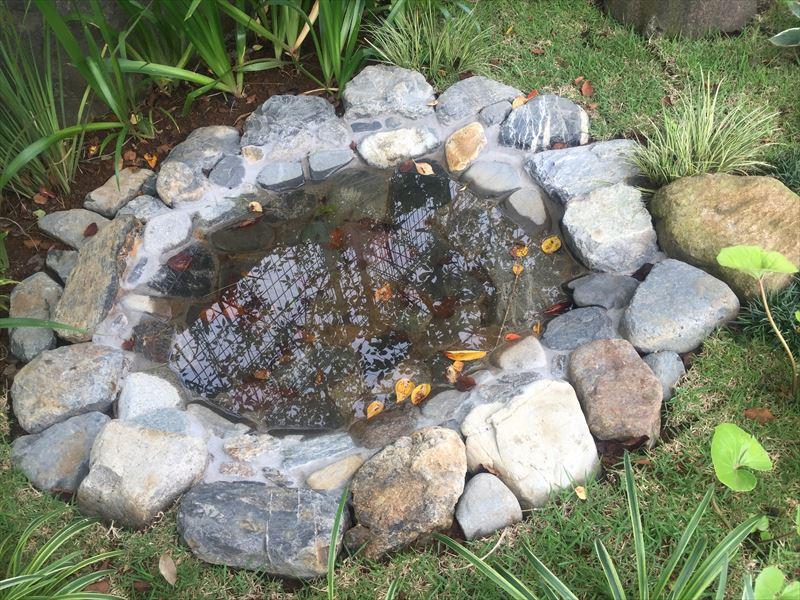 雨水が溜まった池