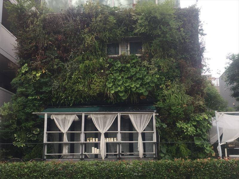 メンテナンス前の一部が荒れた壁面緑化