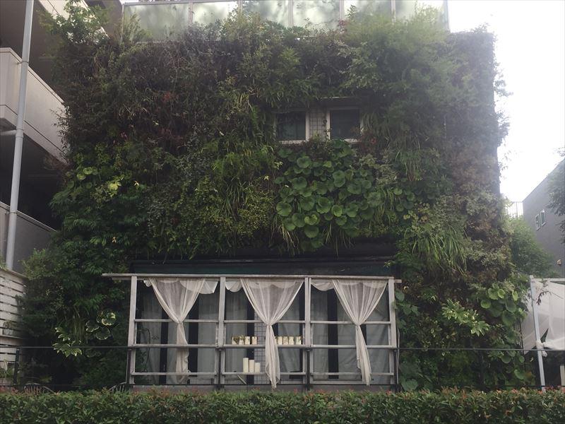 ほぼメンテナンスが完了した壁面緑化