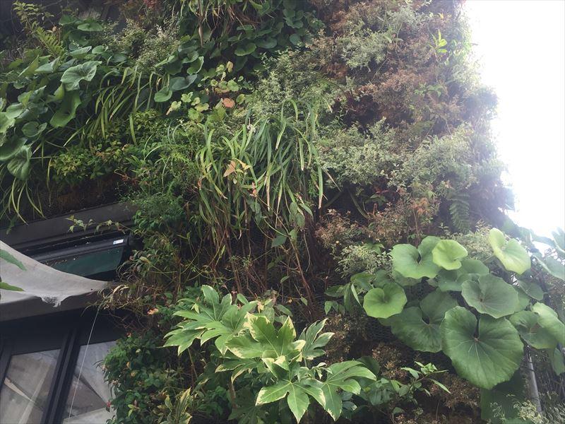 植物の交換が終わった壁面緑化