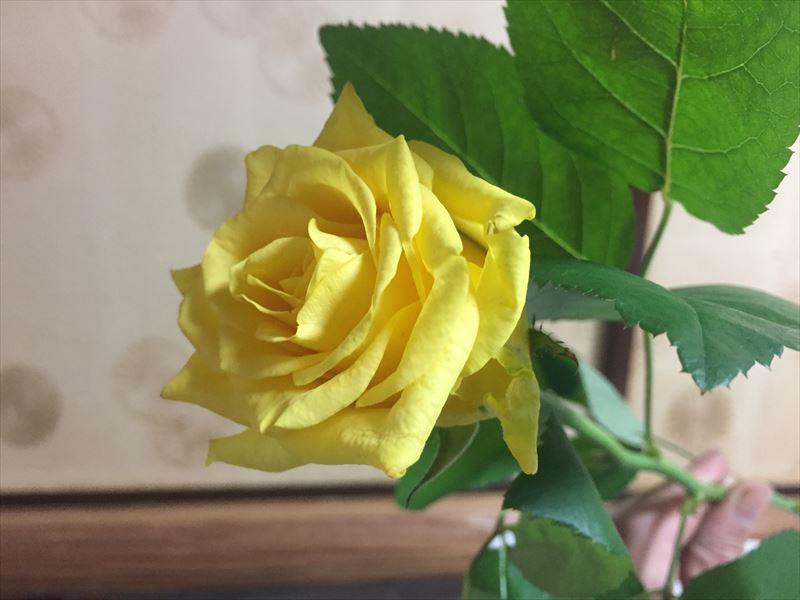 池坊の自由花でメインをはるバラ