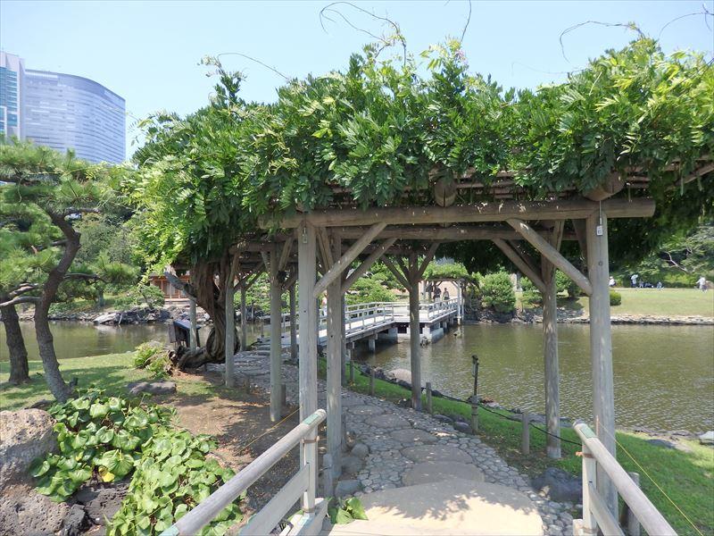橋を渡る途中で楽しめる藤棚