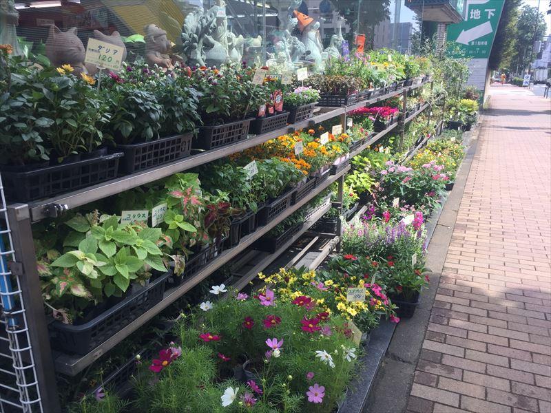 店の前に並んだ旬の花たち
