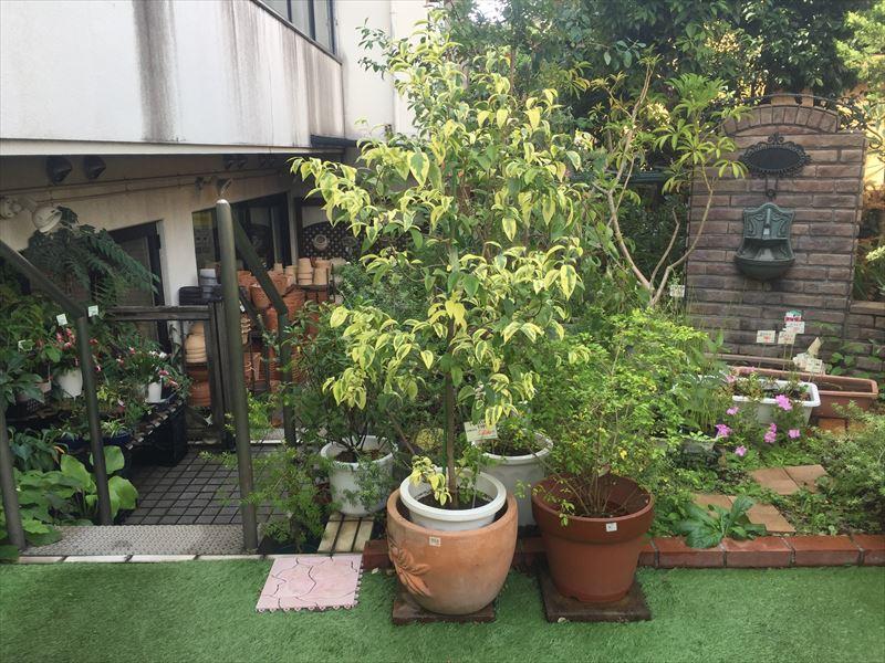中庭には庭木が沢山