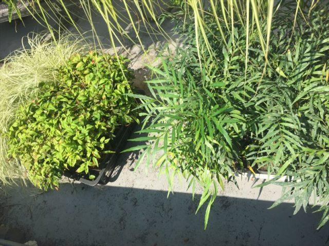 壁面緑化の補修に使う植物