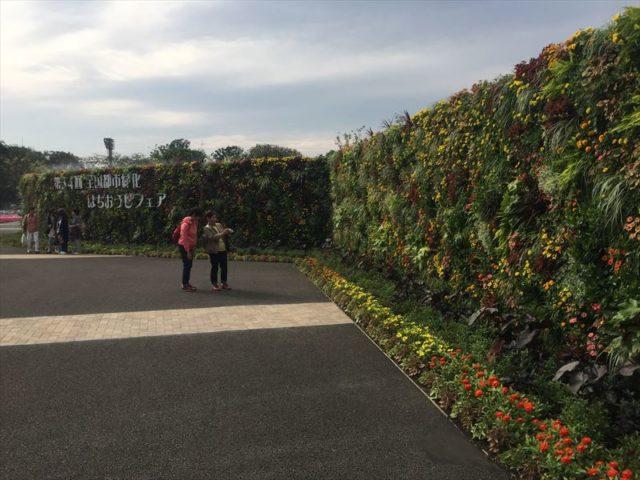 壮大な壁面緑化