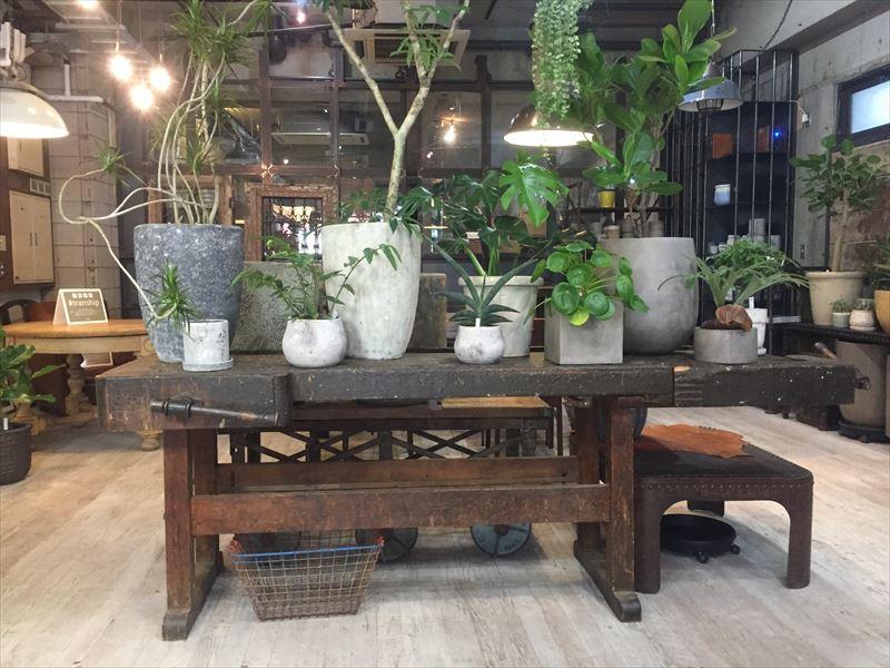 オシャレ観葉植物を扱う武蔵小山のお店