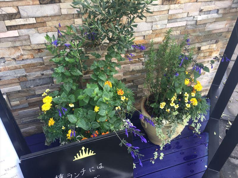華やかな鉢植えの装飾
