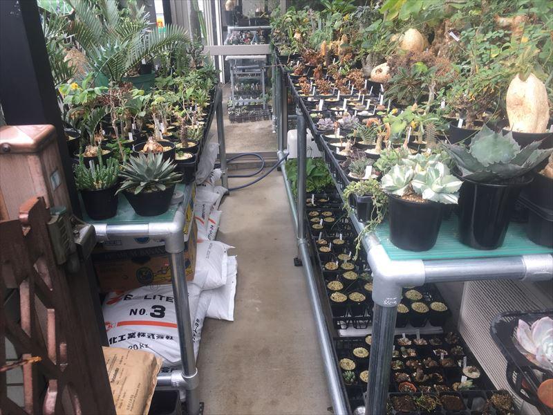 好きな植物を探す楽しみがある