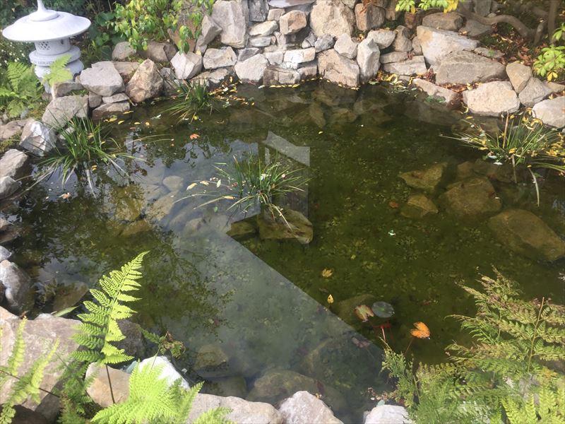循環機能を失った池