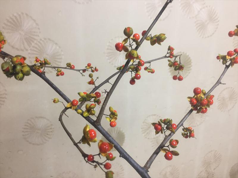いけばなの定番の季節の枝のツルウメモドキ