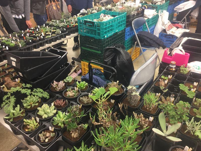 人気の塊根植物も多数登場