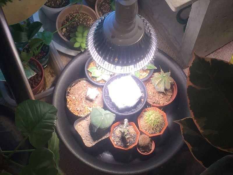 冬越しのため育成ライトを使用