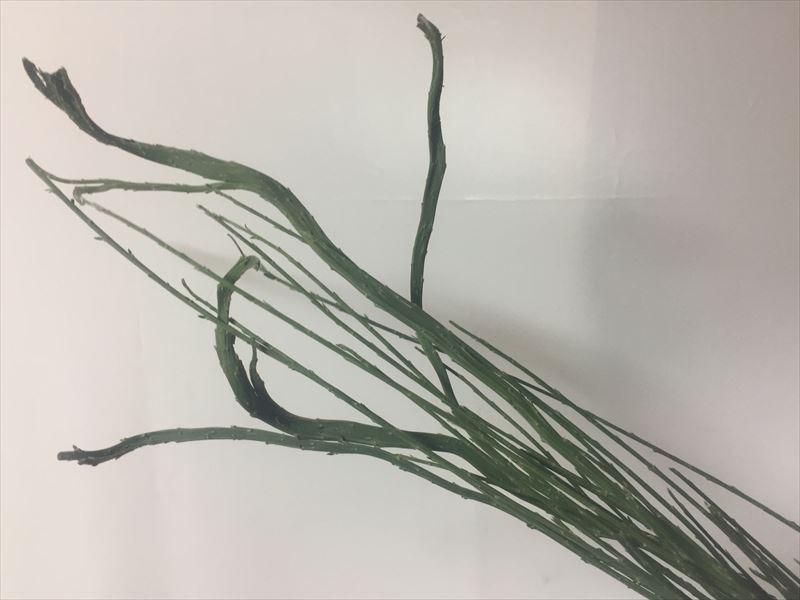 枝ぶりがとてもユニークなエニシダ