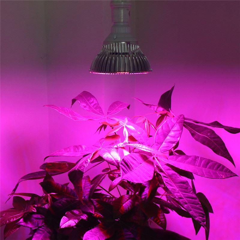 明かりの色がピンクなのが通常の育成ライト
