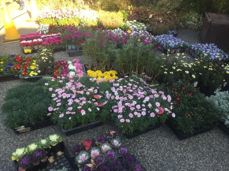 年に3回あるお花の入替え作業