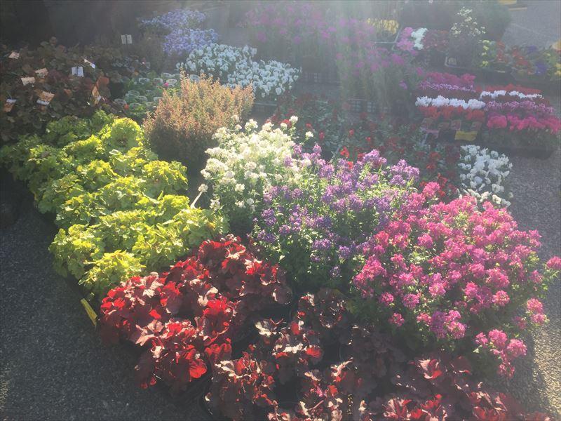 季節の花を大量に入替え作業