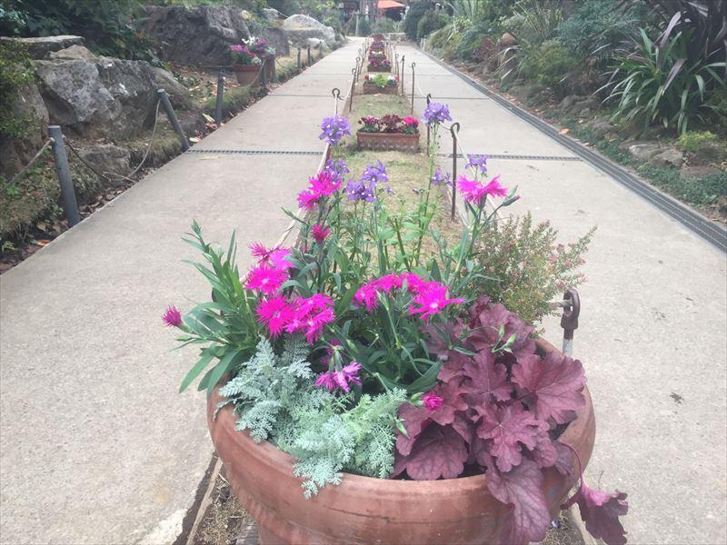 冬使用になった幼稚園の園庭の鉢植え