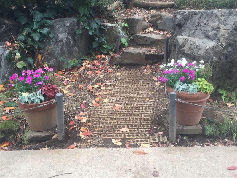 幼稚園の園庭の鉢植えに寄せ植え