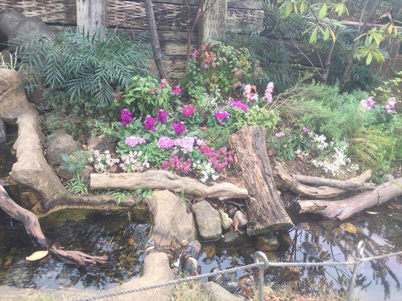 冬の花をいれた園庭の花壇