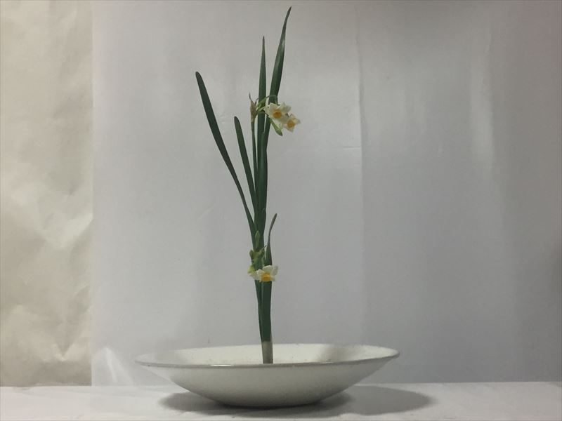 生徒が初めて伝花としての二株水仙をいける