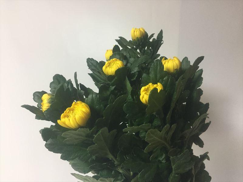 池坊入門試験の花材