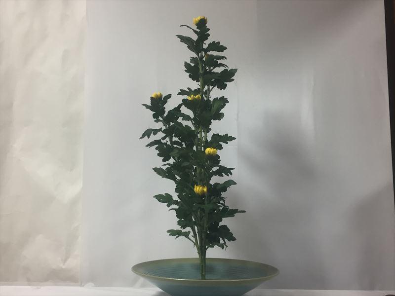 先生の指導が入った菊の生花