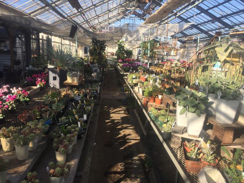 温室を兼ね備えたオシャレ園芸店