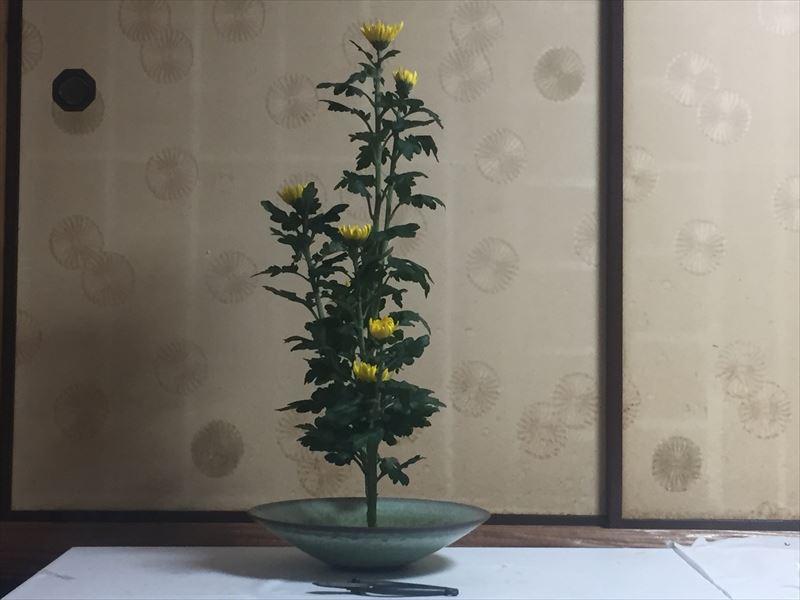 入門試験に向けた菊の生花