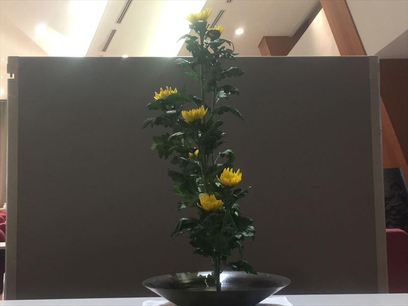 池坊入門試験の菊の生花
