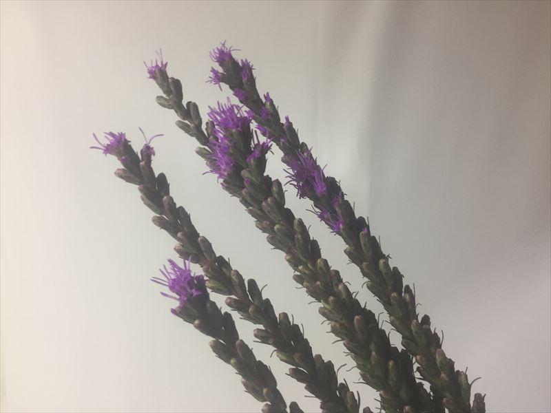 いけばなの初夏の花材