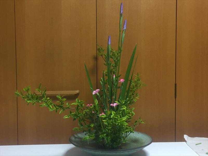 先生の忠告を頂き直した菖蒲とナデシコの自由花