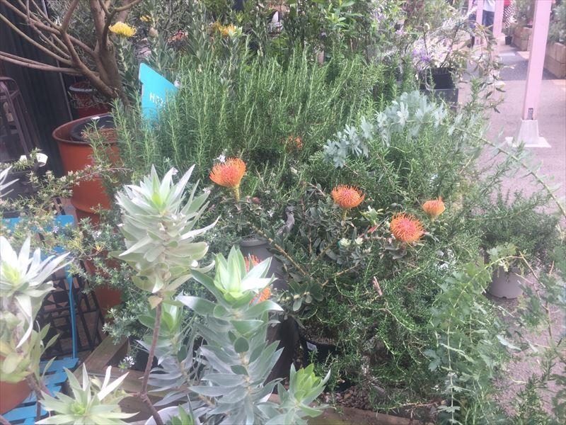 定番から変わり種までそろう花売り場