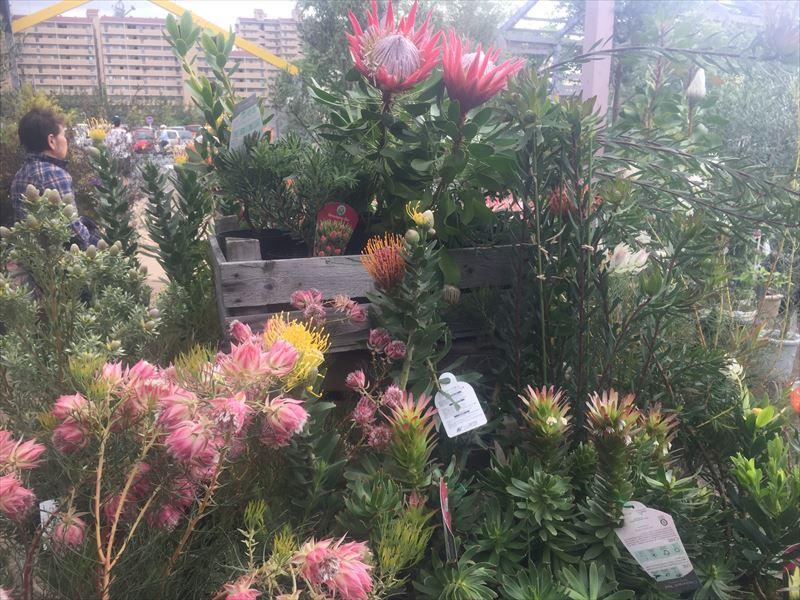 普通の花屋さんにあまりないお花たちがとても沢山あります