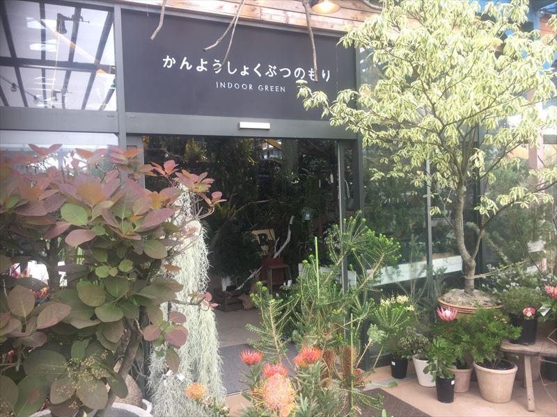 子供にも楽しめる観葉植物売り場