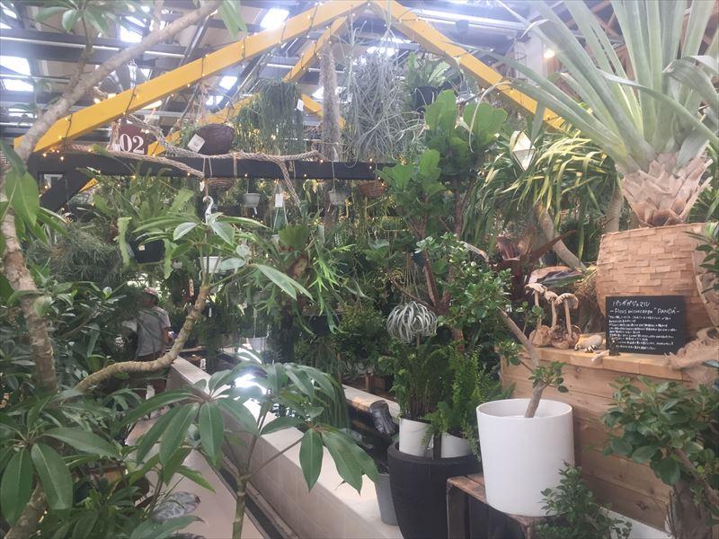 様々は観葉植物が展示してある店内
