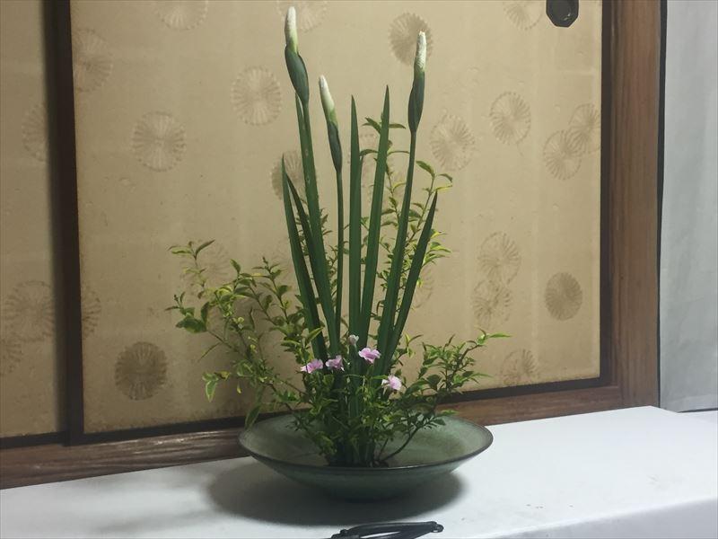 菖蒲とナデシコ、イボタの池坊の自由花