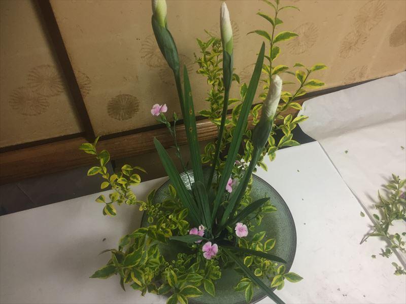 菖蒲が放射状にいけられた池坊の自由花