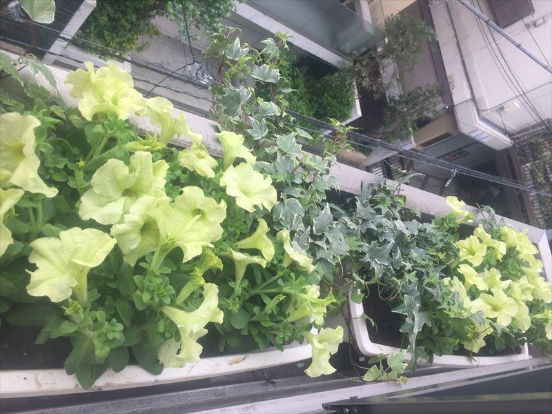 個人邸の三階の窓辺にヨーロッパ式のお花