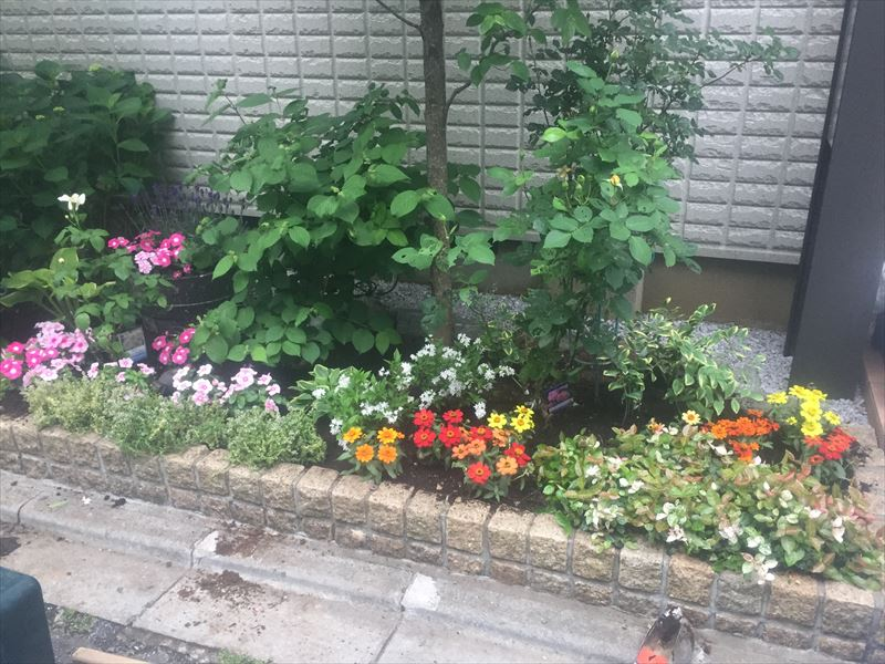 季節の花を耐陰性のある植物で彩った花壇