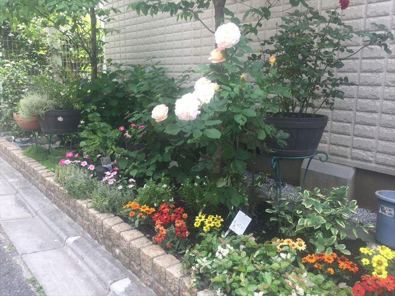 荒れていた花壇を整理して新しい植物を楽しむ場所に