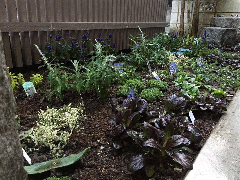 植物の植栽を行った新宿区の新築個人邸のガーデン工事