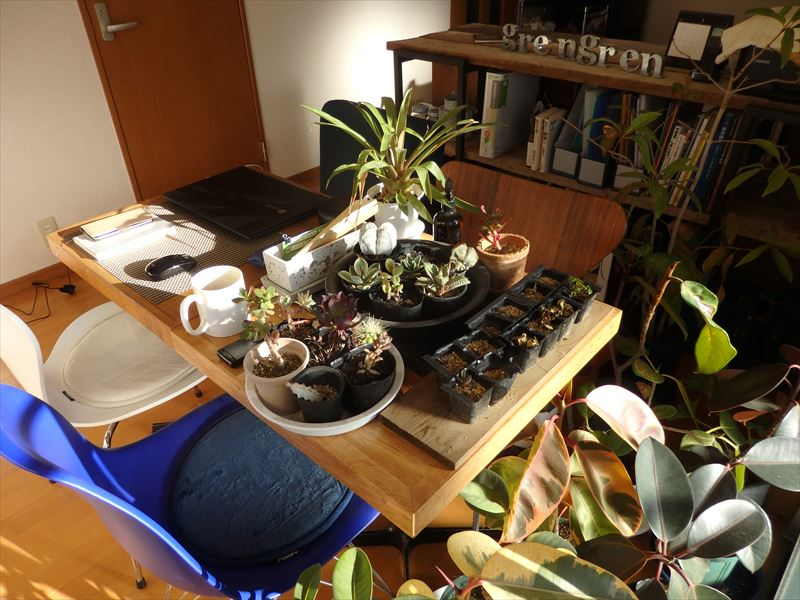 冬越しのための植物で溢れかえった新事務所