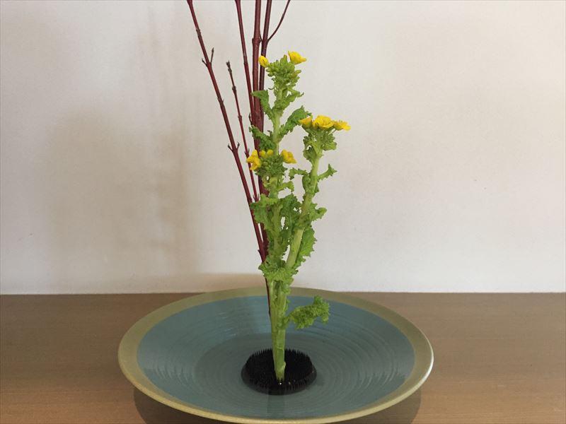 池坊の生花で難しいとされる菜の花の体