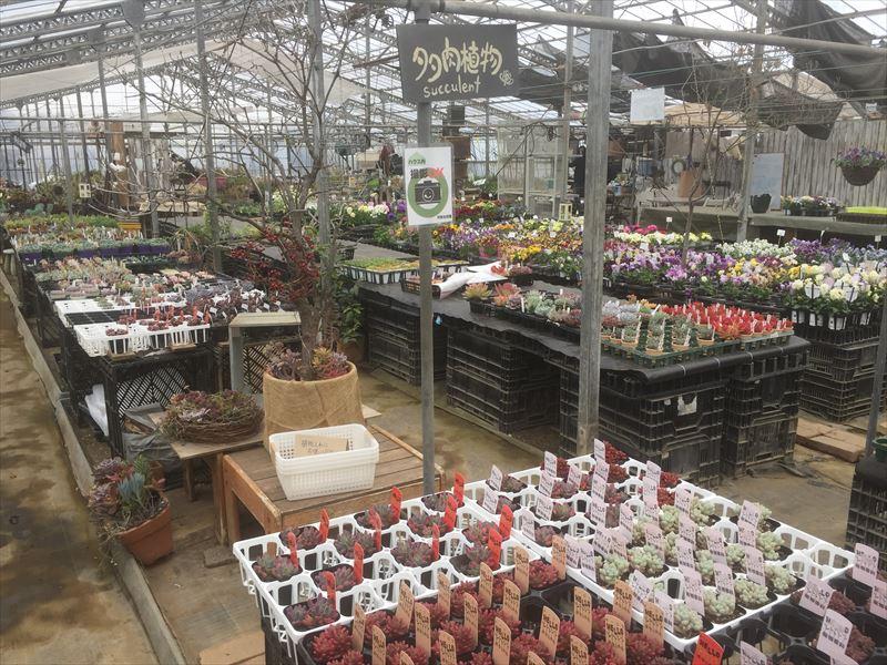 植物が管理されている温室の内部