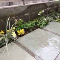 猫除けに効果があるとされるハーブのタンジーを植栽したお庭