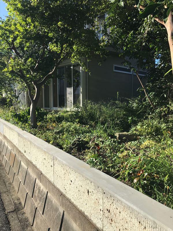 戸建てリノベーション後の放置された夏の庭